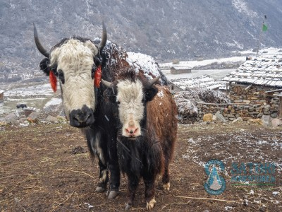 gokyo laketrek mountain flight jungle safari and pokhara tour45