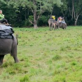 Elephant Safari in Chitwan National Park.